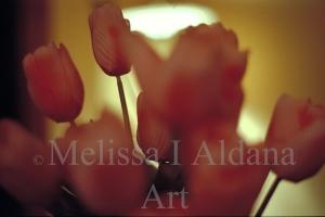 Photograph Tulips at night