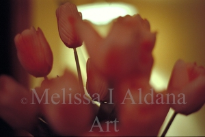 Photograph Tulips at night